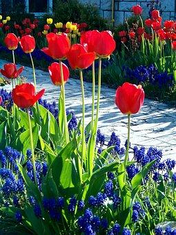 garden-2611959__340