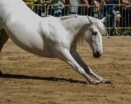 horse-1444046__340