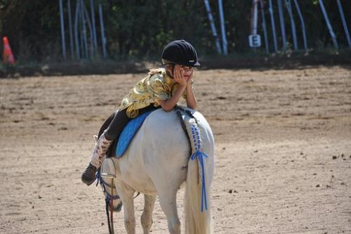horse-1808727__340
