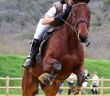 horse-3095667__340